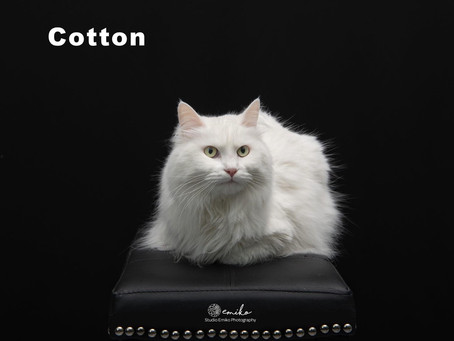 Cotton is a perfect model!