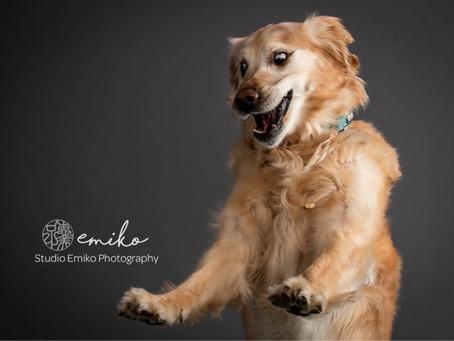 Shooting dogs is always fun!!