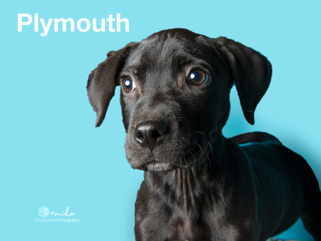 Black Dog and Cat Syndrome Awareness Month
