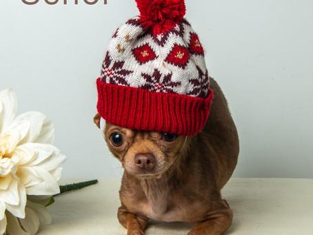 Cute Chihuahua, Senor!
