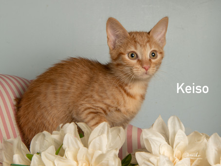 Are there Kitten lovers?