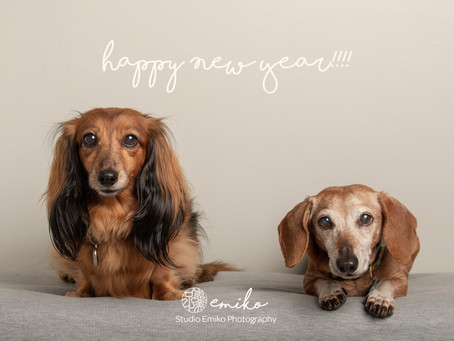 Hello! I'm Pets and Family Photographer!