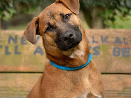 Dog adoption starts on Tuesday!