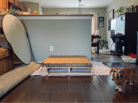 Portable Dog Studio!