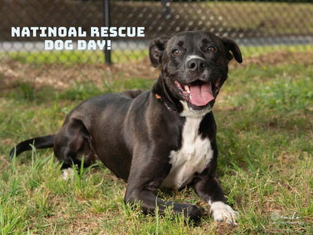 National Dog Rescue Day!