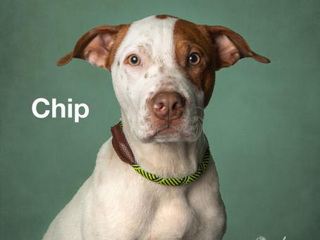 Meet new friend, Chip!