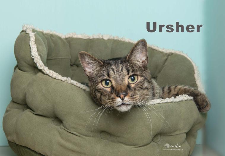 Ursher