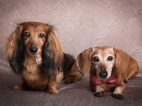 Happy National Dog Day!!