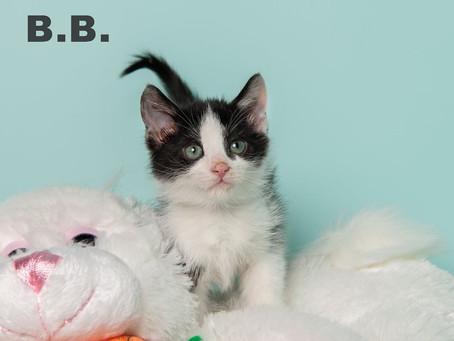 Meet B.B.