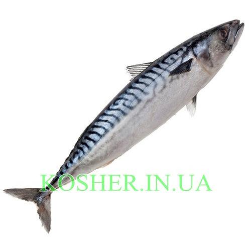 Рыба кошерная Скумбрия 400-600 с/м, кг / קוליס קפוא