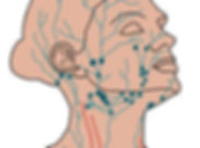 lymph face.jpg