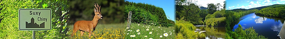 Suxy nature repos rivière province luxembourg semois vierre randonnée cheval chasse animaux faune flore