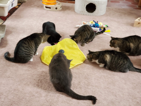 July 2021 - WHY do Cats play with some toys and others they ignore ??