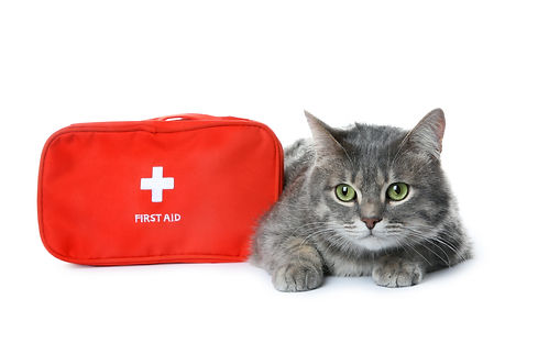 First aid kit and cute cat on white back