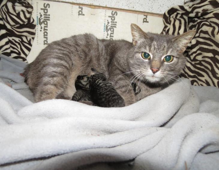 Mama Kitty 3-24-2014.jpg