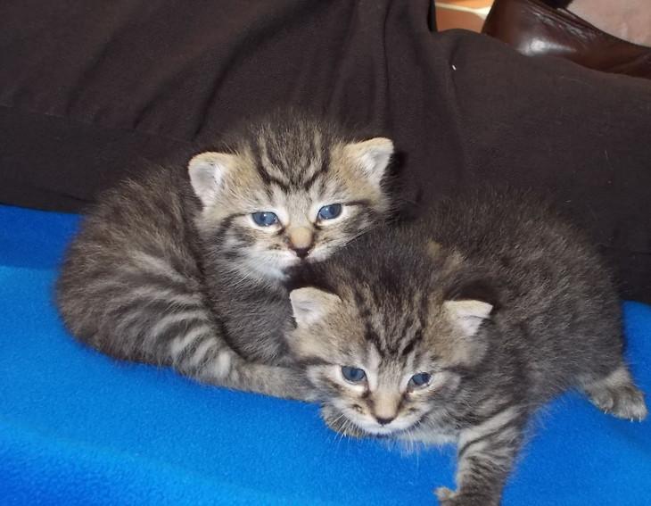 Mama Kitty Babies April 2014.jpg