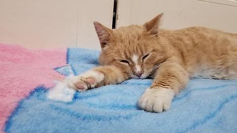 Garfield 01-19.jpg