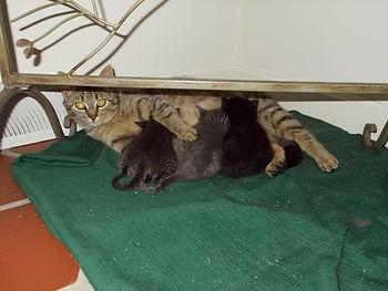 Stripey #1 and babies.jpg