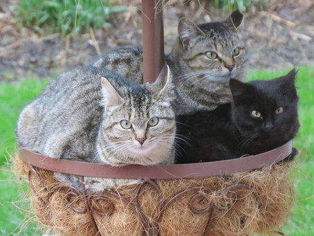 May 2021 - OUR Experience with FIV (Feline Aids) and Our Cats