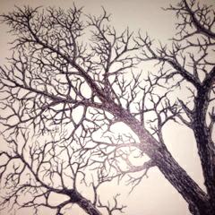 tree124_edited.jpg
