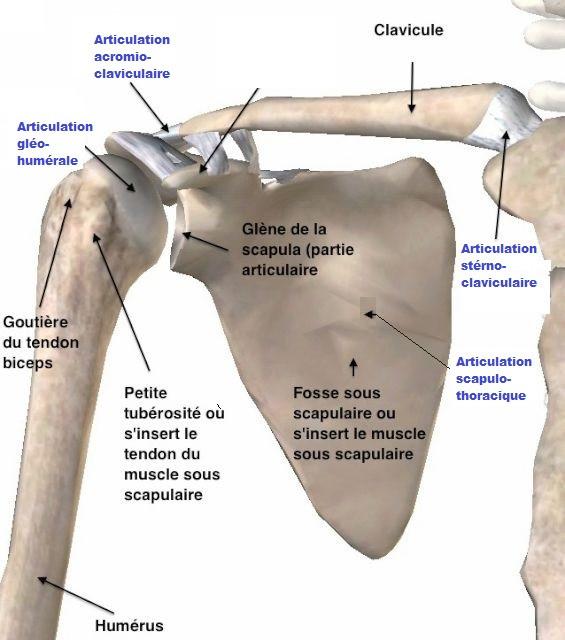 articulation douleur épaule