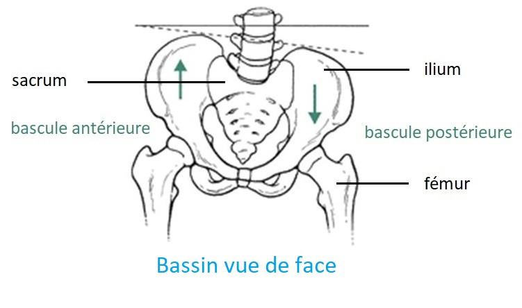 bascule déséquilibre bassin chiropracteur