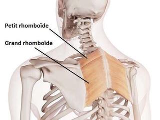 douleur épaule d'origine dorsale costale
