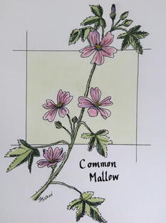JulieATurner_CommonMallow_Inkandwatercol