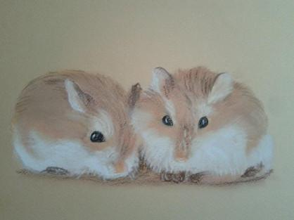 Dwarf Hamsters - Martin Bond.jpg