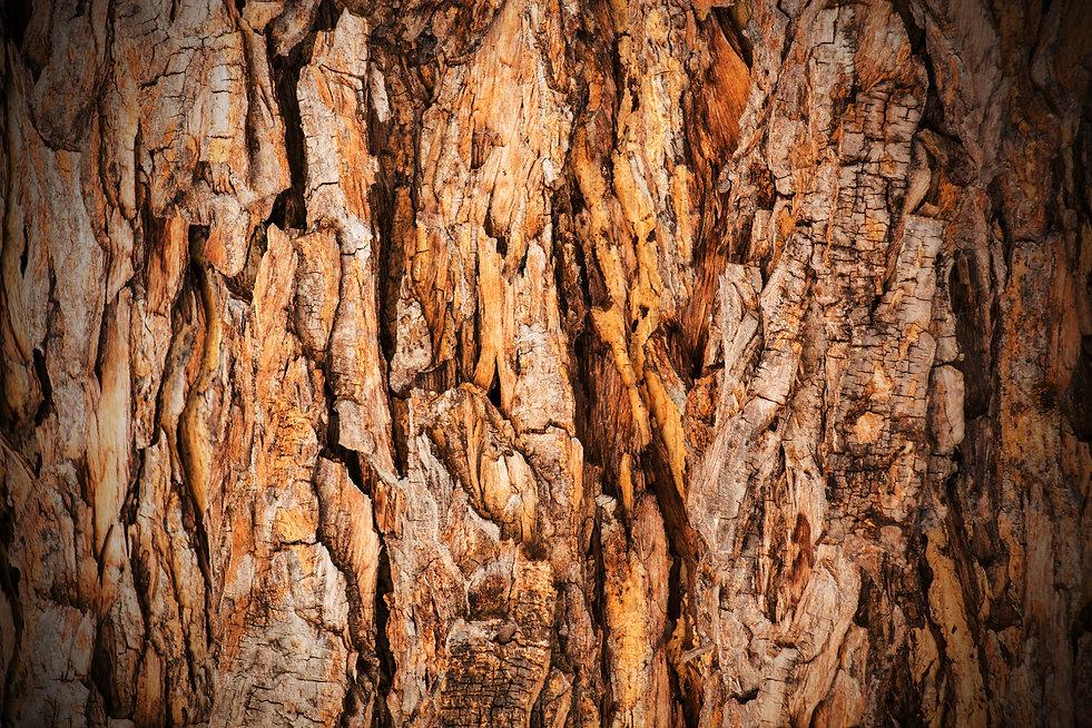 TREE Flip.jpg