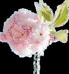 Spring flower tspt.png