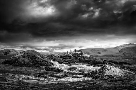 Pinguinos sobre rocas_MG_2481 F.jpg