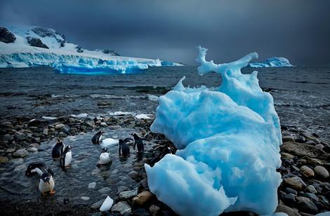 Iberg playa pinguinos alberca.jpg