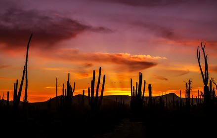 Cactus atardecer_MG_0152.jpg