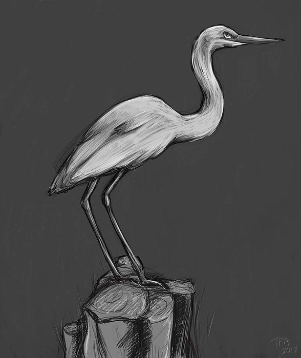 seaquarium-bird1.jpg
