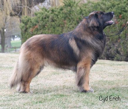 Kalahari Leonbergers | Our Dogs
