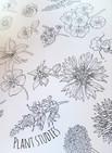 Skizzen essbarer Blüten, Fineliner, 2021