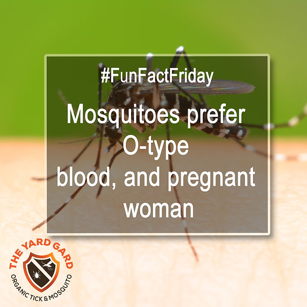 mosquito facts, mosquito repellent, what do mosquitoes like, how to get ride of mosquitoes, keep mosquitoes away from me, mosquitoes and pregnant woman, bllod type
