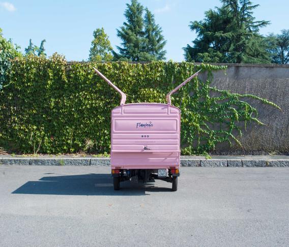 flamingo-4.jpg