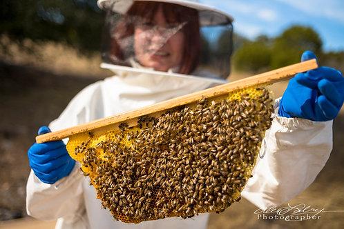 "2021 Top-Bar Hive Nuc 19"" (Treatment Free)"
