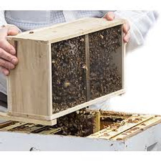 AUSTIN PICKUP - PACKAGE of BeeWeaver Local Survivor Bees