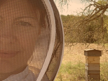 """Ag Exemption"" Using Honey Bees in Texas - Don't miss the April 30th Deadline!"