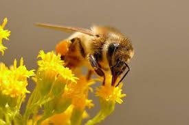 "The ""Magic"" of Honey"