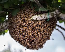 swarm.jpeg