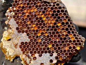 Pollen and Honey in comb