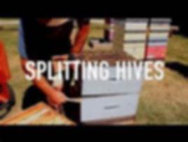 splitting.jpg
