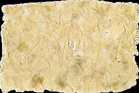 papier végétal.png