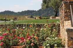 Mountain View Vineyard South Bay Wine Tours Cardinal Transportation