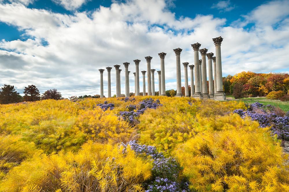 American National Capitol Columns at the Arboretum