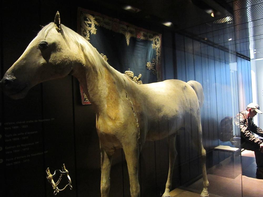 Napoleon's stuffed Arabian stallion, Le Vizir